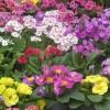 March Garden Guru